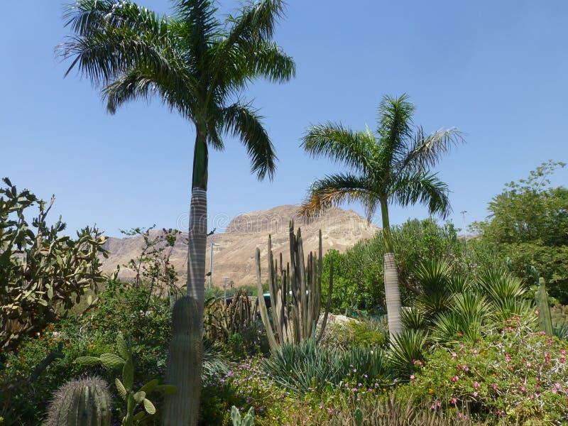 Ein Gedi naturreserv i Israel på det döda havet royaltyfria foton