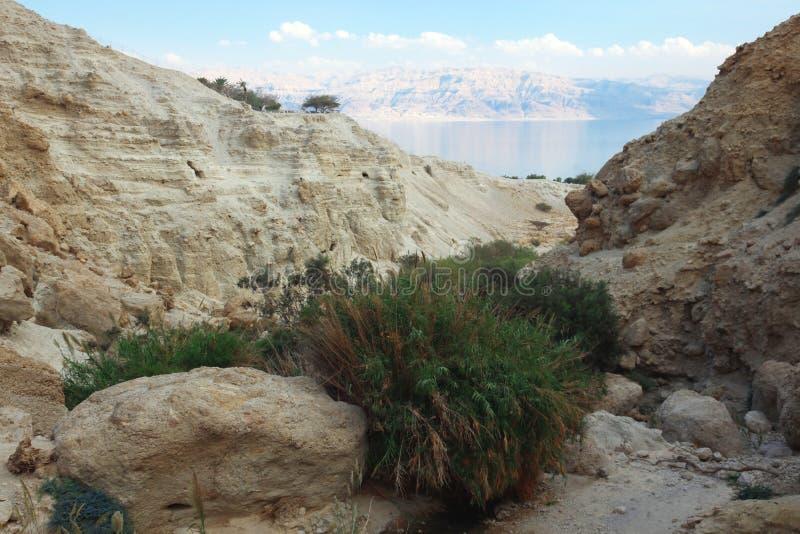 Ein Gedi Oase in Israel lizenzfreies stockbild