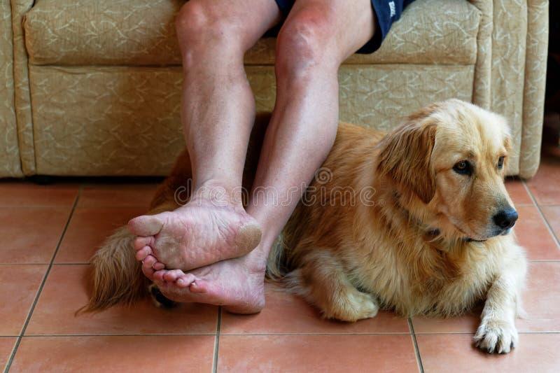Ein geduldiger Hund liegt auf dem Boden, der auf seinen Meister wartet, um etwas zu tun lizenzfreies stockbild