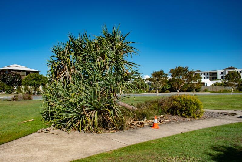 Ein gefallener Baum verursacht eine Gefahr auf einem lokalen Fu?weg stockbilder