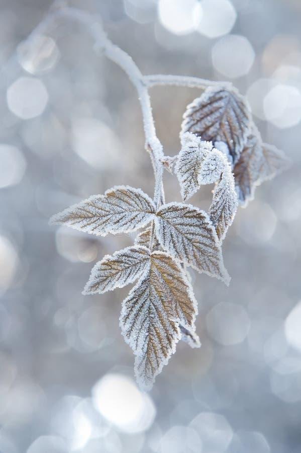Ein gefrorenes Blatt und eine Leuchte lizenzfreie stockbilder
