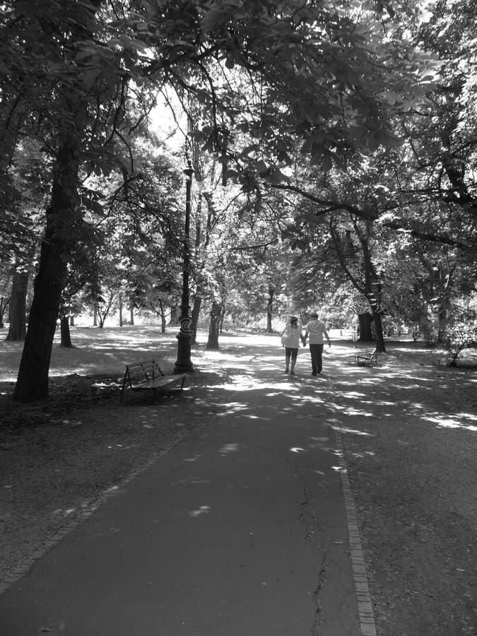 Ein Gehweg von Bäumen lizenzfreies stockfoto