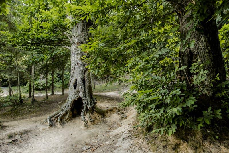 Ein Geistbaum lizenzfreies stockfoto