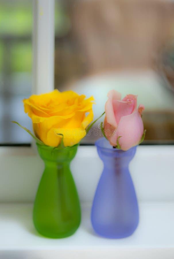 Ein Gelb und eine rosa rosafarbene Knospe stockbilder