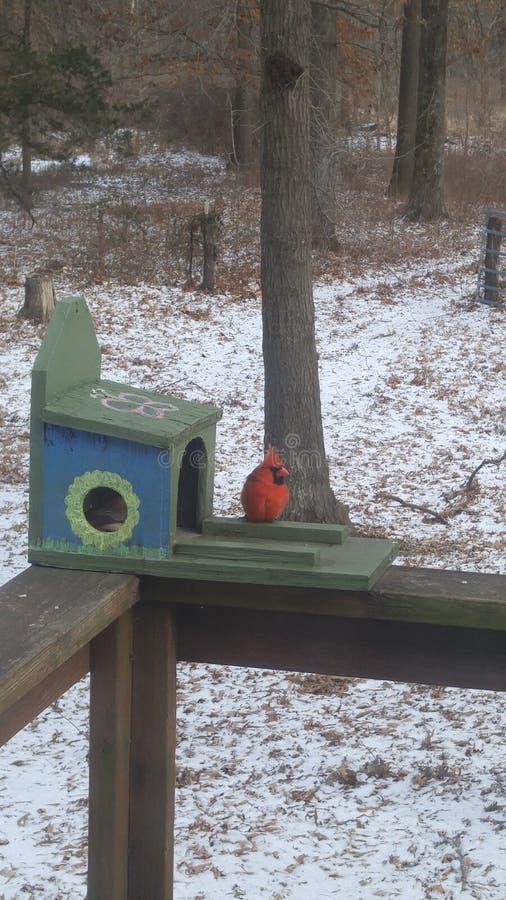 Ein gemütlicher Kardinal in einem Wintermärchenland lizenzfreies stockfoto