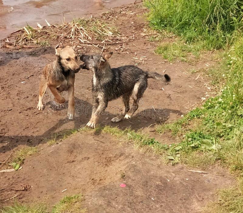 ein Gespräch zwischen zwei Hunden lizenzfreies stockbild