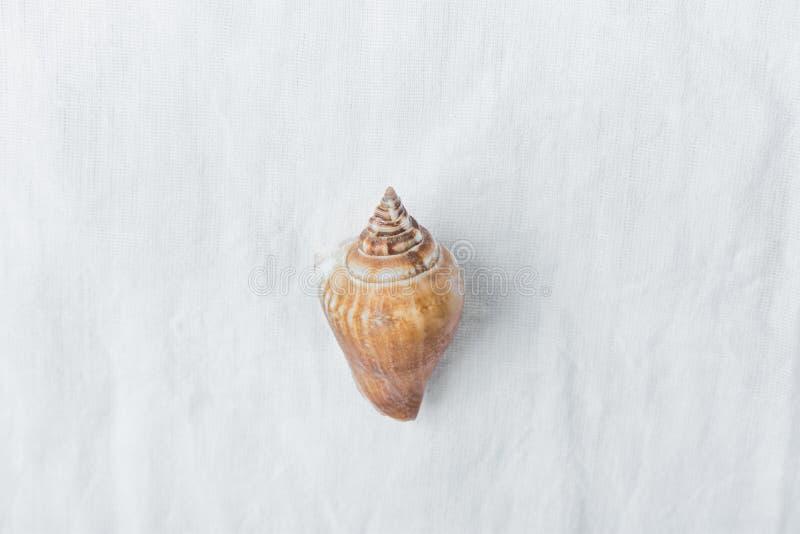 Ein gewundenes beige Meer Shell Browns auf weißem Leinengewebe-Hintergrund Unbedeutendes modernes angeredetes Foto auf Lager für  lizenzfreie stockbilder