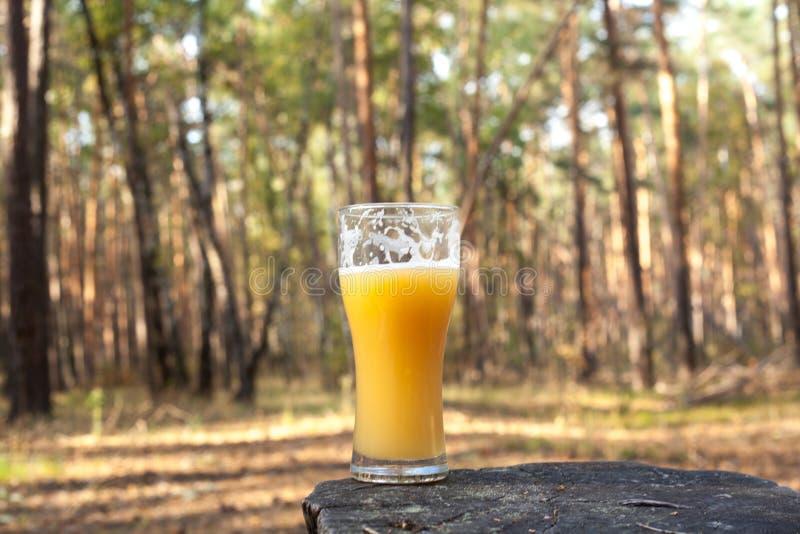 Ein Glas Bier im Wald lizenzfreie stockfotos