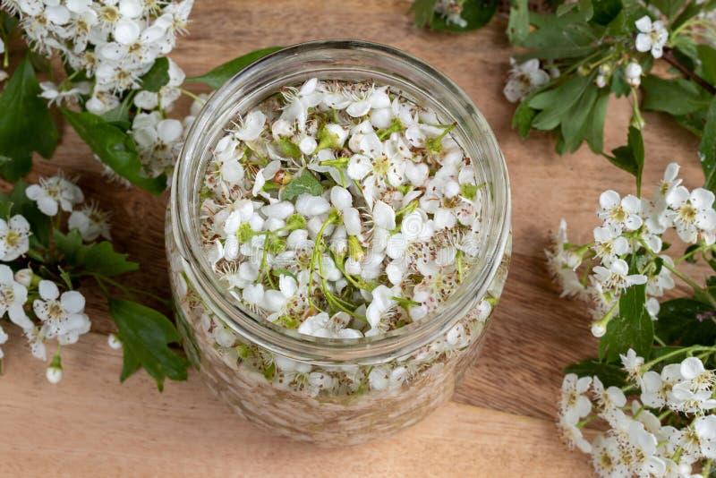 Ein Glas füllte mit frischen Weißdornblüten und -alkohol, zu prepar stockfotografie