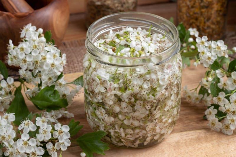 Ein Glas füllte mit frischen Weißdornblüten und -alkohol, zu prepar lizenzfreies stockfoto