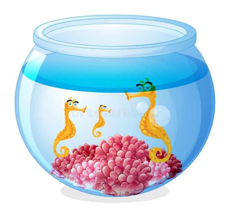 Ein Glas mit drei Seahorses vektor abbildung