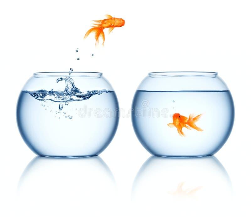 Ein Goldfishherausspringen des fishbowl lizenzfreie stockbilder