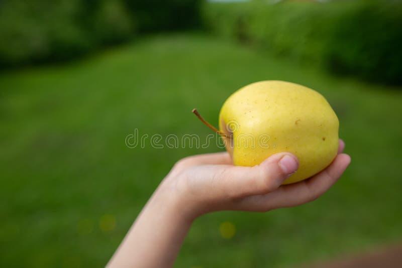 Ein grüner Apfel in einer Hand, die heraus erreicht lizenzfreies stockfoto