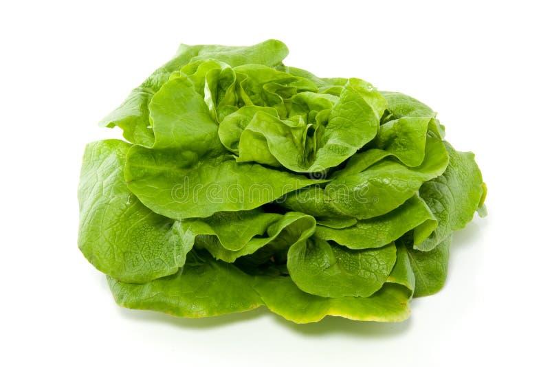 Ein grüner Kopfsalat lizenzfreie stockfotos