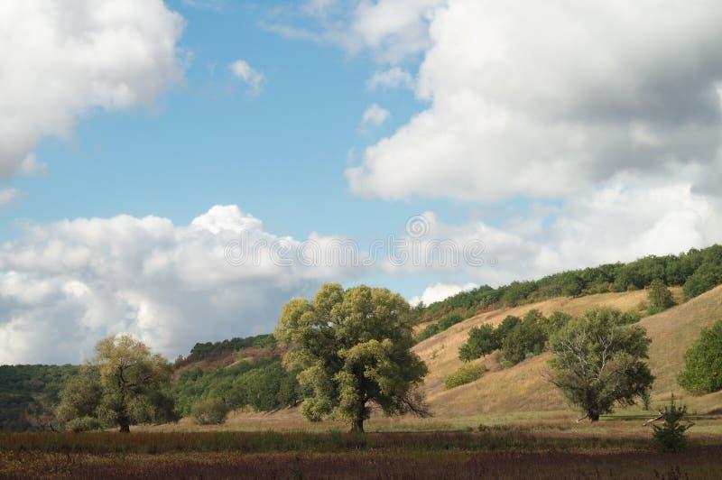 Ein großer ausgebreiteter Baum in einem hügeligen Tal des sonnigen Herbstes, gegen einen Hintergrund eines klaren blauen Himmels  stockbilder