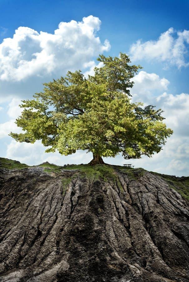 Baum auf Berg lizenzfreie stockfotos
