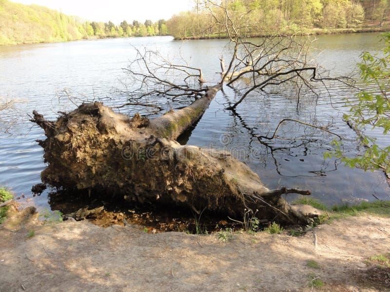 Ein großer Baumstamm gefallen in das Wasser stockfotografie