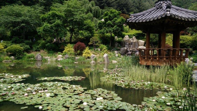 Ein großer Garten von Lotos stockfoto