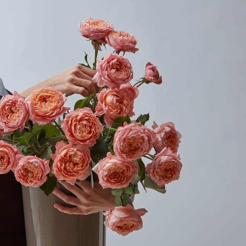 Ein großer heller Blumenstrauß von rosa Rosen in einem Vase wird durch Frauen ` s Hände auf einem grauen Hintergrund mit einem Ko stockfotografie