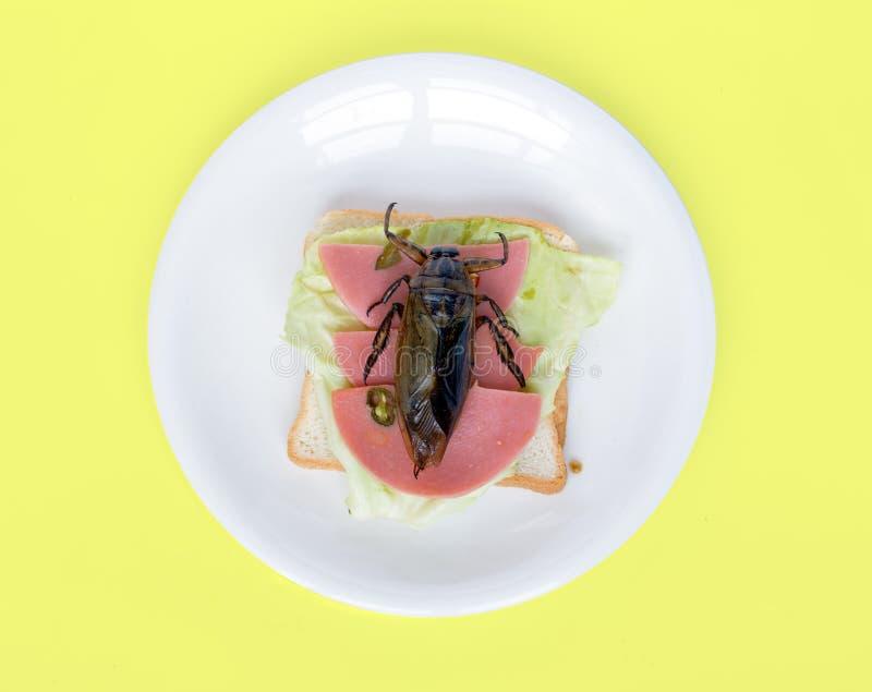 Ein großer Käfer auf Toast auf Platte stockbild