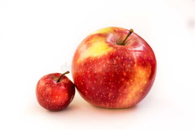 Ein großer roter und rosa Apfel mit einem kleinen Paradiesapfel, der auf einem Weiß wild ist, lokalisierte Hintergrund Ein kleine lizenzfreies stockfoto