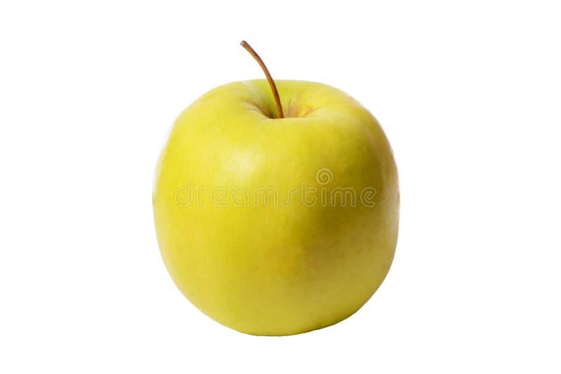 Ein großes Gelb, goldener appetitanregender und köstlicher reifer Apfel auf einem Weiß lokalisierten Hintergrund lizenzfreie stockfotos