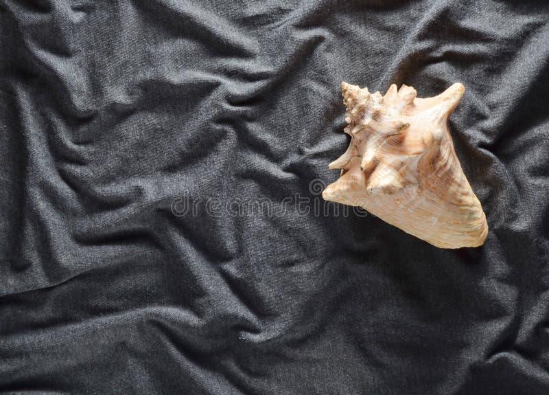 Ein großes Ozeanoberteil auf einem grauen Gewebehintergrund Beschneidungspfad eingeschlossen stockfoto