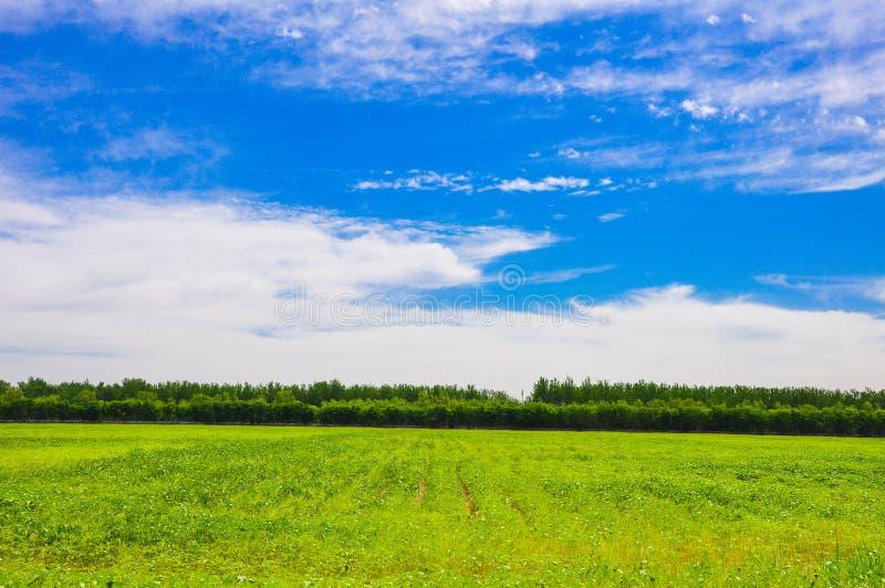 Ein großes und sauberes Feld durch Himmel lizenzfreie stockfotografie