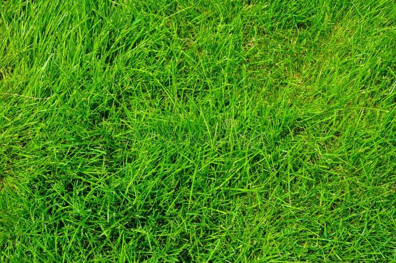 Ein gro?er und sauberer Rasen stockbilder