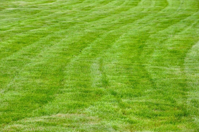 Ein gro?er und sauberer Rasen lizenzfreie stockfotografie