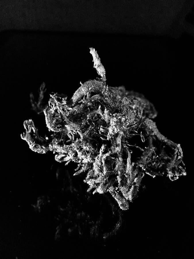 Ein hässlicher Bazillus Monster auf einem schwarzen Hintergrund stockbilder