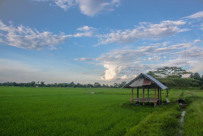 Ein Häuschen im Reisfeld lizenzfreies stockbild