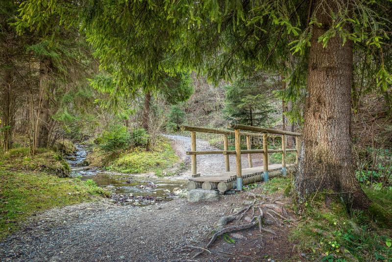 Ein hölzerner Steg über einem Strom in einem Wald stockbilder