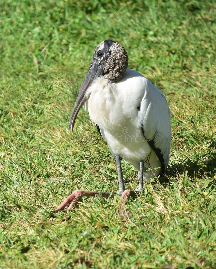 Ein hölzerner Storch entspannt sich auf dem Gras Eine große und mannigfaltige Anzahl von Vögeln machen See Morton ein Haus lizenzfreies stockfoto