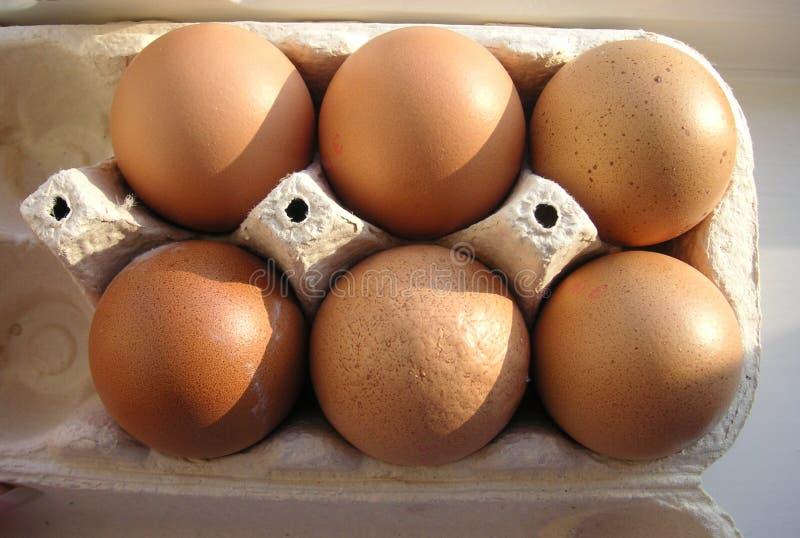 Ein halbes Dutzend Eier in einem Kasten lizenzfreies stockfoto