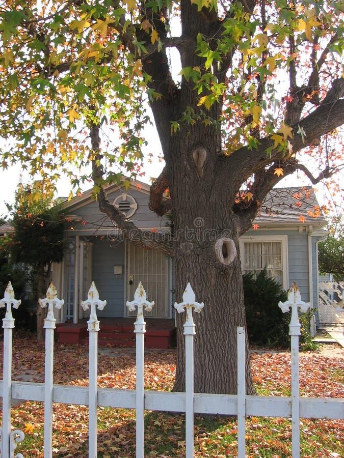 Ein Haus und ein schöner Baum lizenzfreies stockfoto