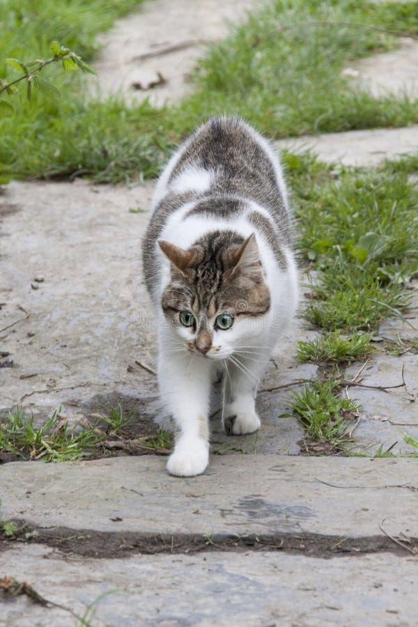 Ein Haustier, eine Wildkatze? Wer weiß? Er war, dem Sie ` t noch etwas tun können, aber ihn zu lieben so neugierig, und lustig Hi stockfotos