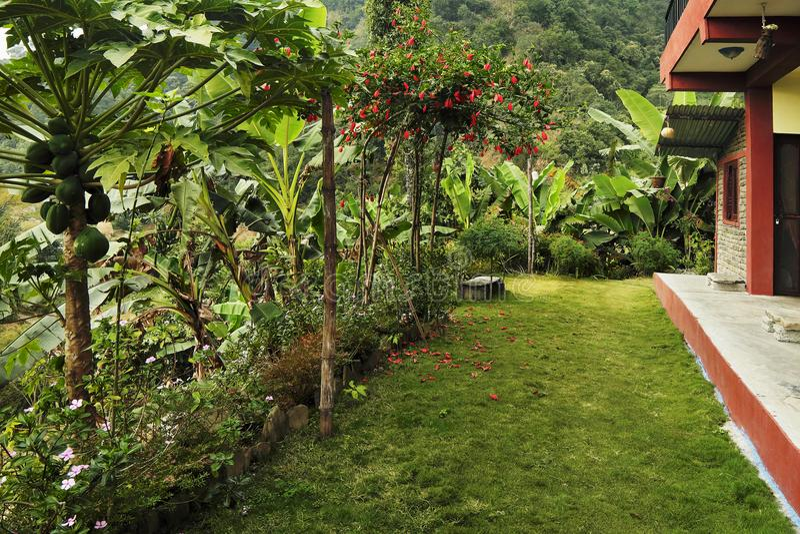 Ein heller sogar grüner Rasen vor dem Haus in den Tropen, s lizenzfreie stockfotos