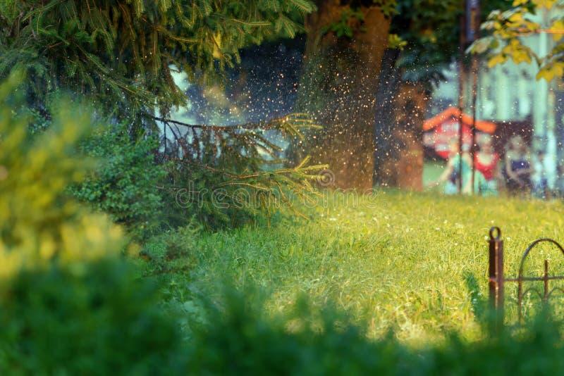 Ein helles Stück der städtischen Natur lizenzfreie stockbilder