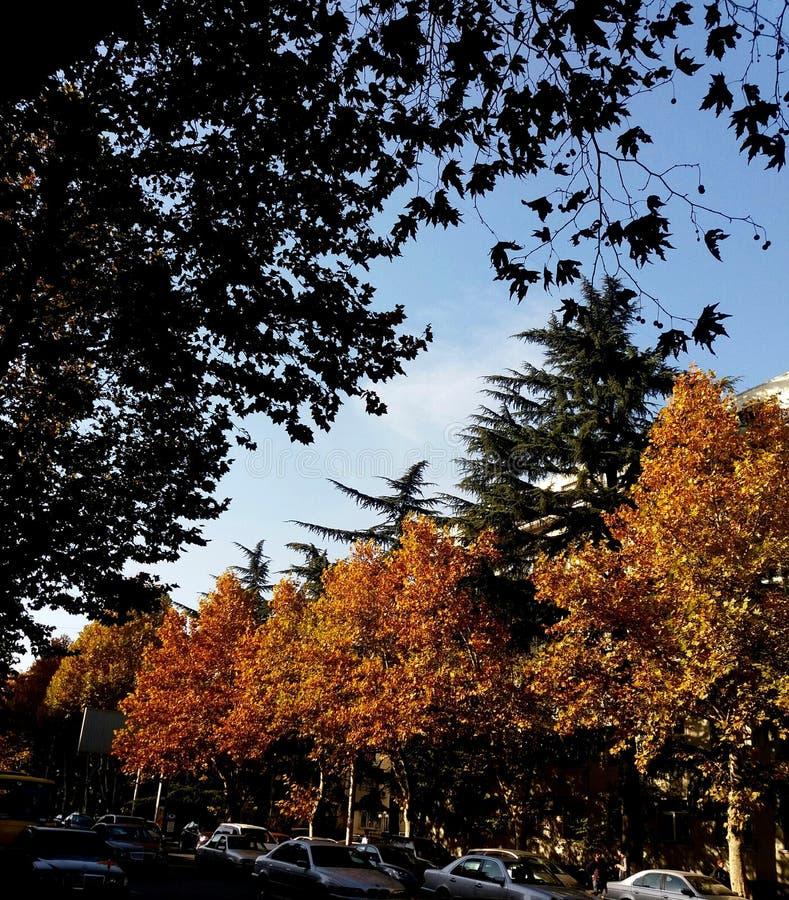 Ein Herbsttag lizenzfreies stockfoto