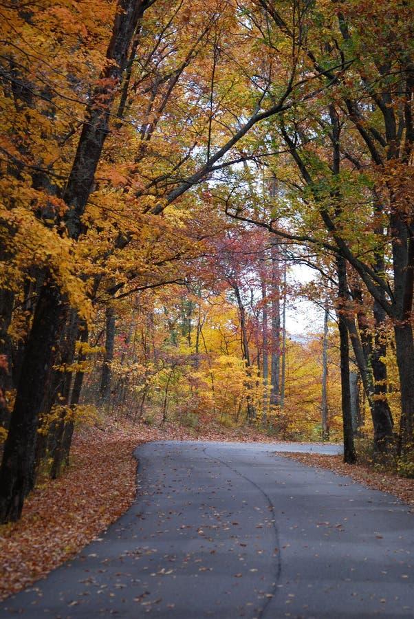 Ein herrlicher Weg von hell farbigen Bäumen im Herbst bei Morton Arboretum stockfoto