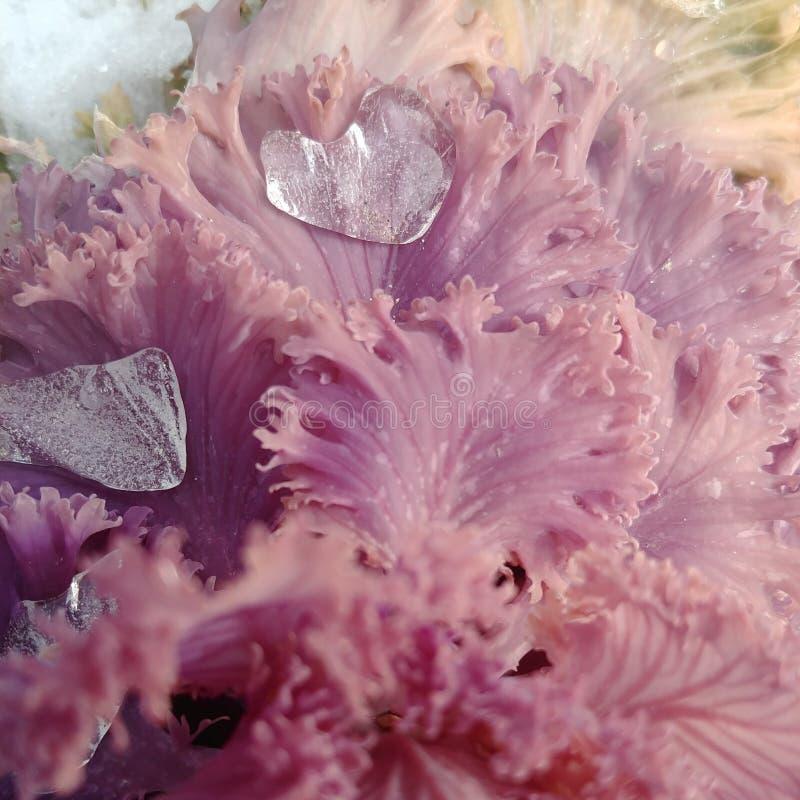 Ein Herz formte gefrorenen Eiszapfen auf einer Kohlanlage lizenzfreies stockbild