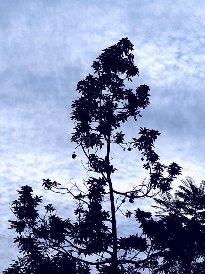 Ein Himmelhintergrund des Baums morgens stockfotos
