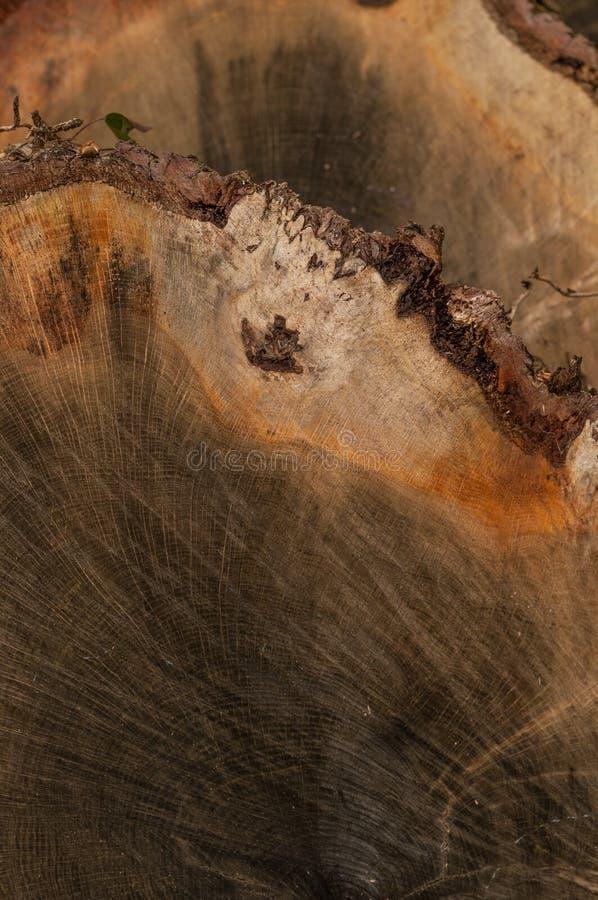 Ein Hintergrund von geschnittenen Bauholzabschnitten stockbild