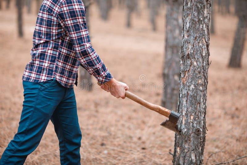 Ein Holzfäller verringerte einen Kiefernwald draußen stockbilder
