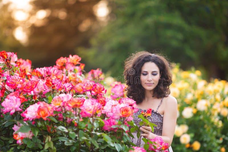 Ein horizontales Porträt der jungen kaukasischen Frau mit dem dunkelbraunen gelockten Haar nahe rosa Rosenbusch, unten schauend lizenzfreie stockbilder