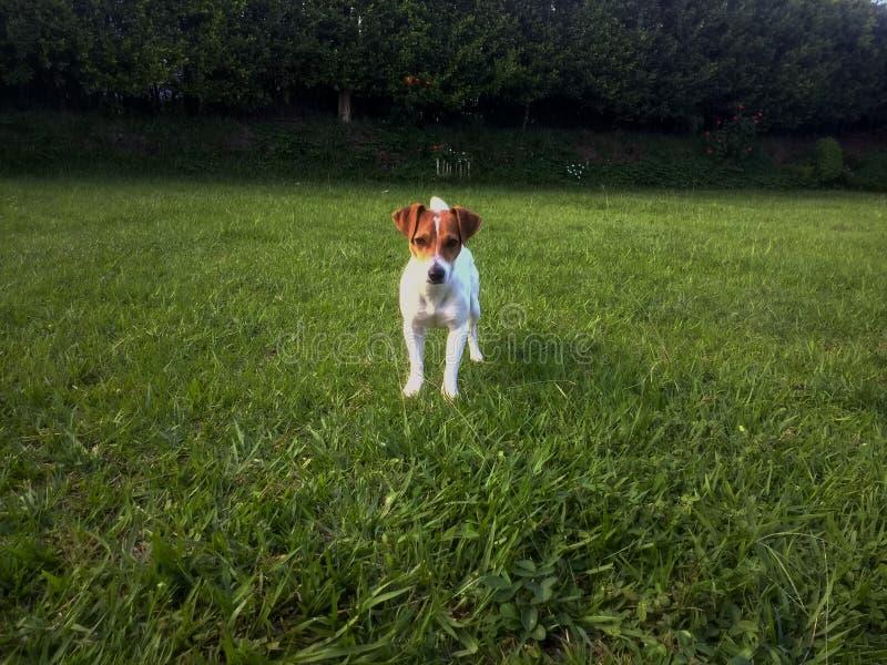 Ein Hund auf dem Gebiet lizenzfreies stockfoto