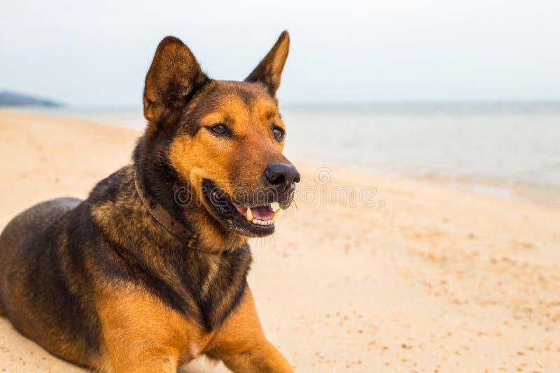 Ein Hund auf dem Strand lizenzfreie stockbilder