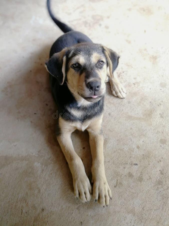 Ein Hund auf dem Zementboden lizenzfreies stockbild
