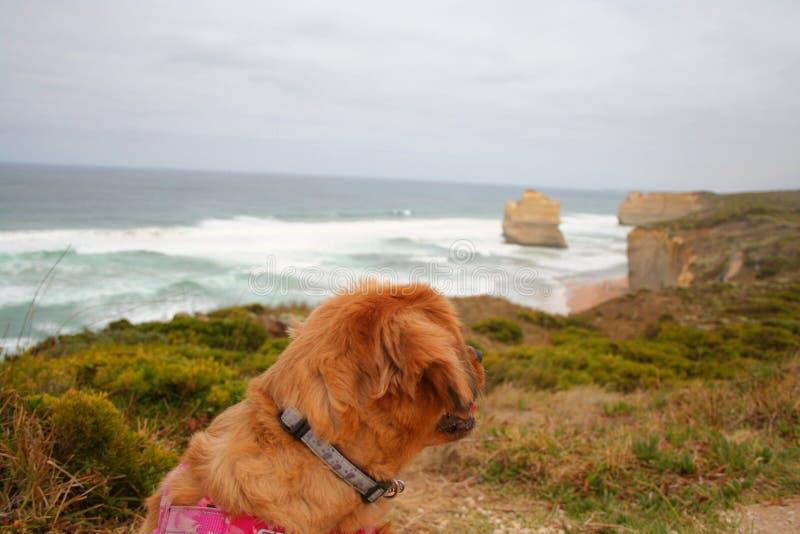 Ein Hund auf einer Klippe, lizenzfreie stockfotos